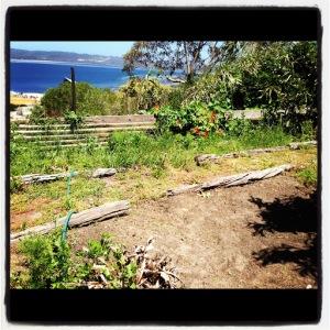 My garden, my metaphor for life